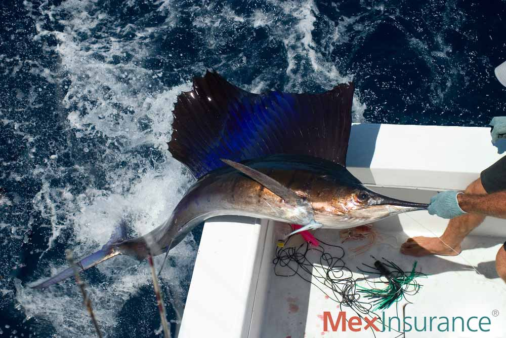 Man pulls Sailfish onboard his boat in Baja California Sur