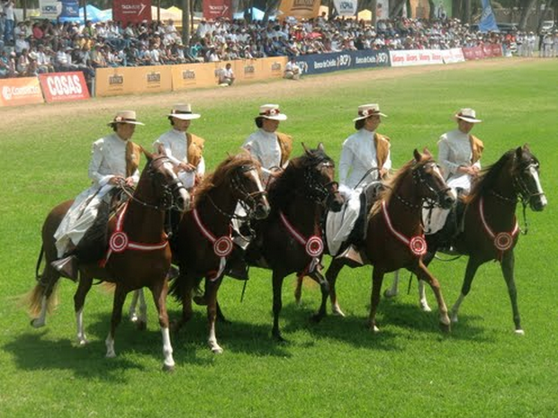 festival caballo