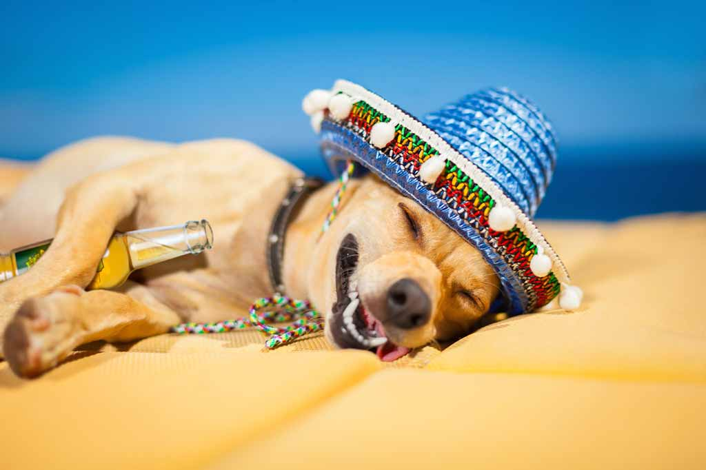 Dog had fun in Mexico