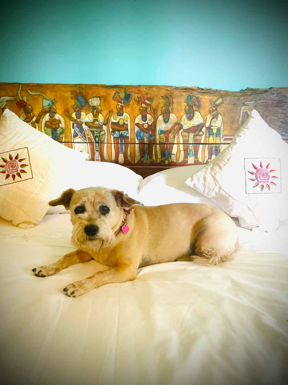 My Fur Baby in Our Hotel in Holbox