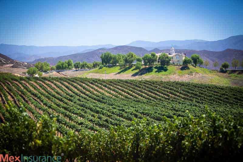 Wine Yard view in Temecula, California