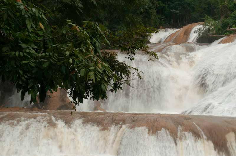 Agua Azul Tree over Falls
