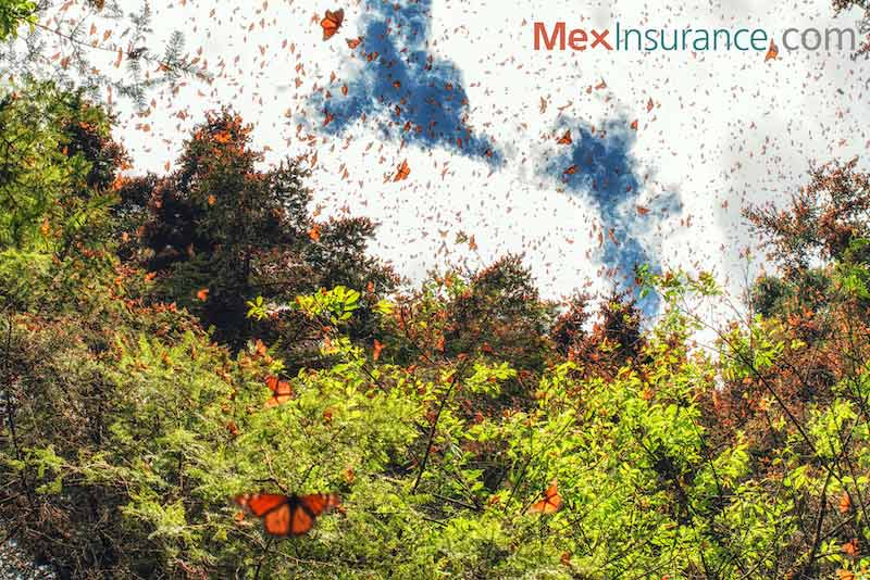 Monarch Migration to Mexico