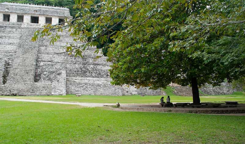 Palenque Tree Shade and Pyramid